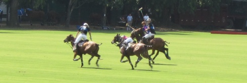 polo match buenos aires field horses